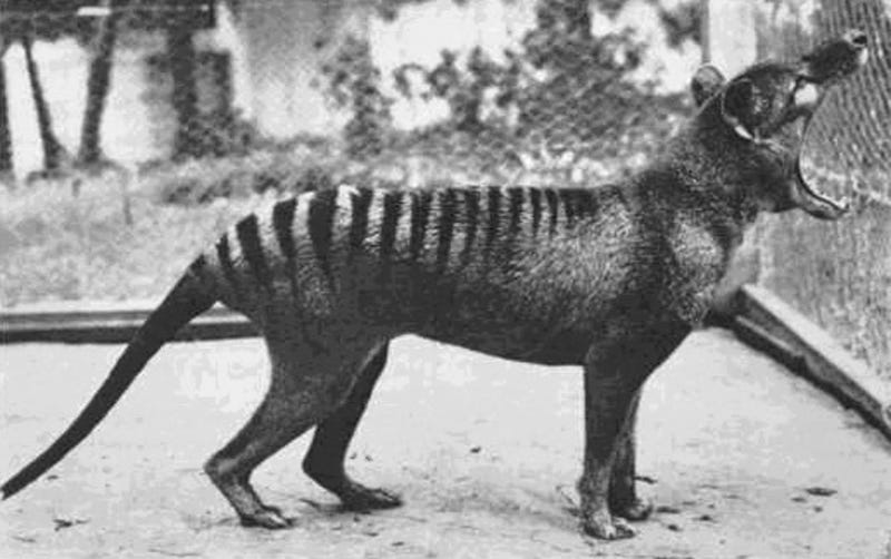 Some of the World's Rarest (and Strangest) Creatures