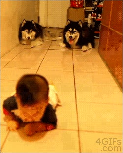 Crawling Dogs Race Crawling Baby In Internet-Eradicating Video