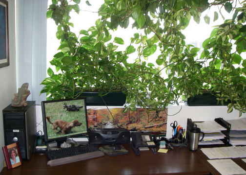 The Workplace Jungle