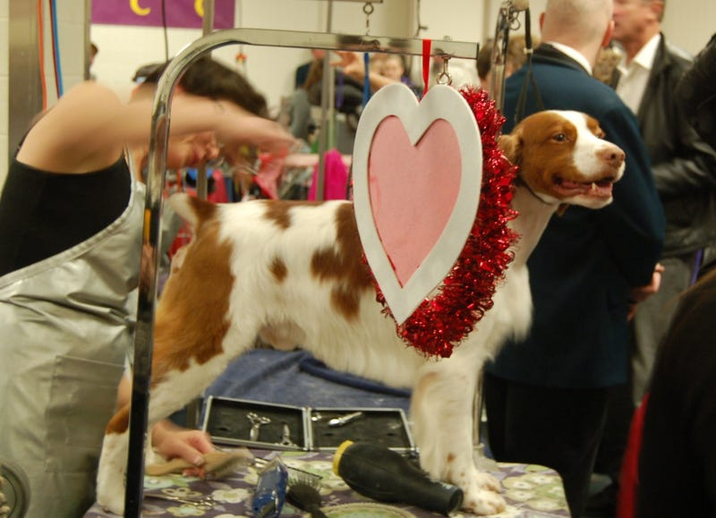 Looking For Love On Valentine's Day At Westminster