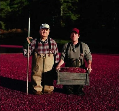 Ocean Spray Will Not Hesitate to Destroy You to Protect Its Cranberry Secrets