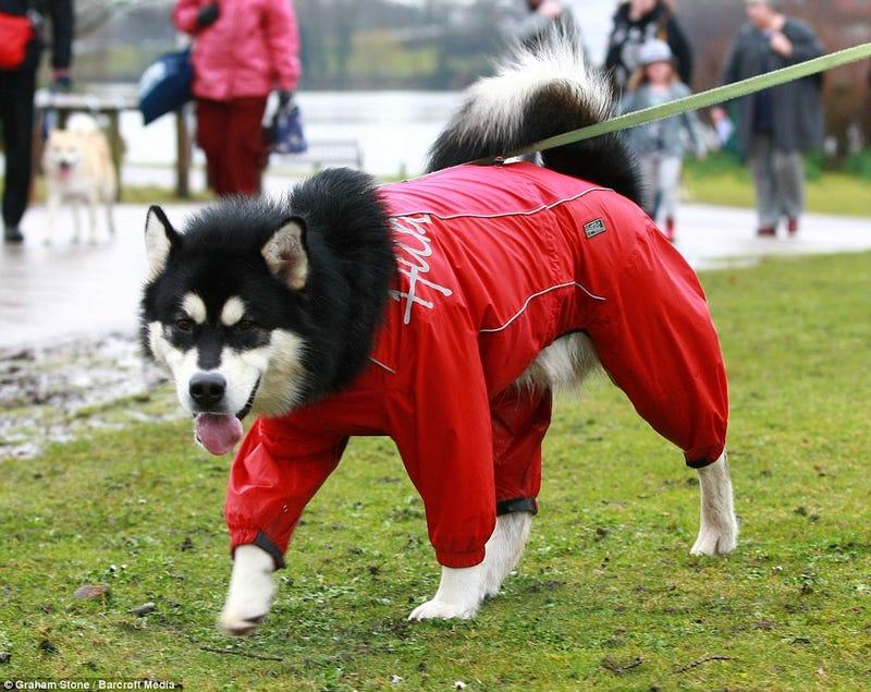 DOG SHOW!