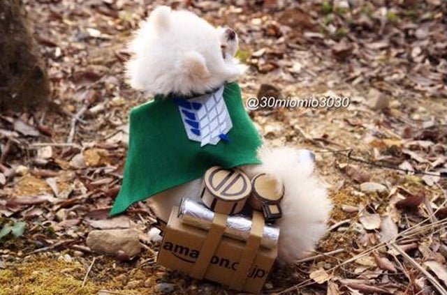 Little Dogs Make Attack on Titan Cosplay Cuter