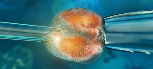 Scientists Have Cloned Embryos From Adult Cells For the First Time Ever