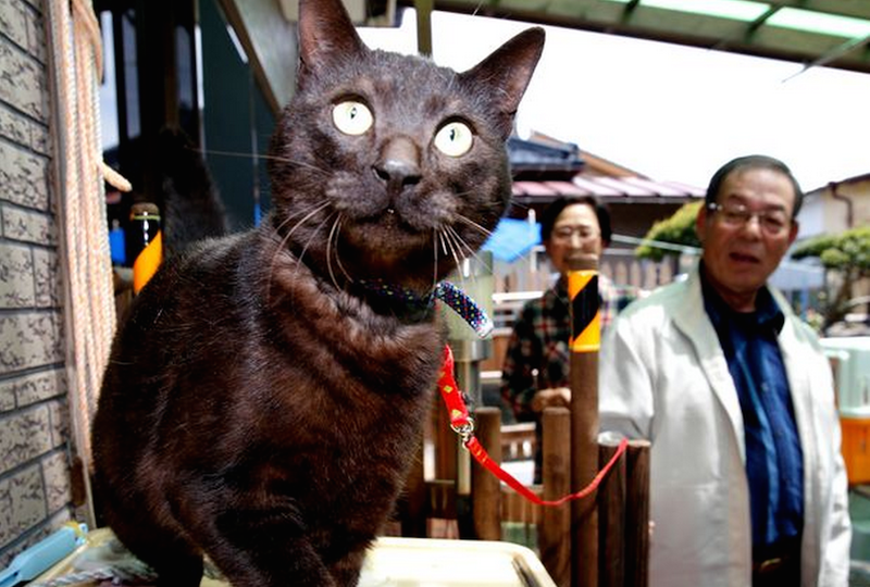 Cat Reunited With Family Three Years After Going Missing in Tsunami