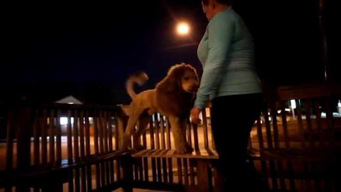 'Lion' on the Loose in Virginia Turns Out to be a Labradoodle with a Mane