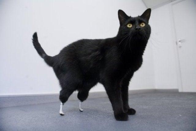 Go Go Gadget Cat Legs!