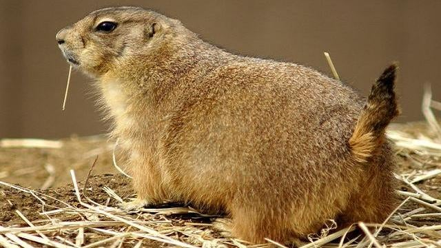 What do prairie dogs have words for?