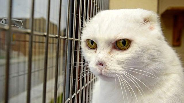 """Voldemort Cat"" Finds A Good Home, Despite Having No Ears"