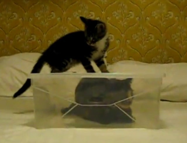 Kitten Tries to Liberate Friend From Box