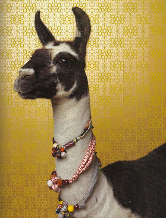 Anthropologie's New Models Are Total Animals