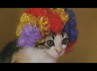 Nobody Should Have To Choose Between Serious Journalism And Cats In Wigs