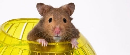 What Does A Hamster Have To Do With Super Mario Galaxy?
