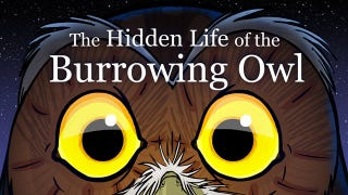 This Tale Of An Owl Starts As A Nature Film—And Ends As A Revenge Flick