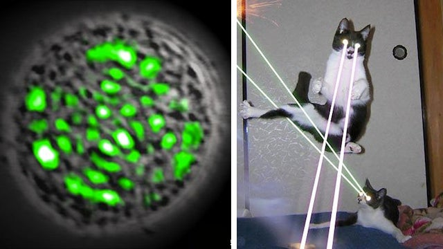 Scientists Equip Living Cells With Frickin' Laser Beams