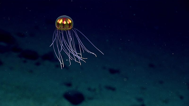 There Are Some Seriously Gnarly Creatures at the Bottom of the Mariana Trench