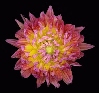 Artist uses NASA technology to capture the cosmic beauty of flowers in extreme detail