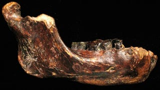 This Big-Toothed Fossil May Represent A Primitive New Human Species