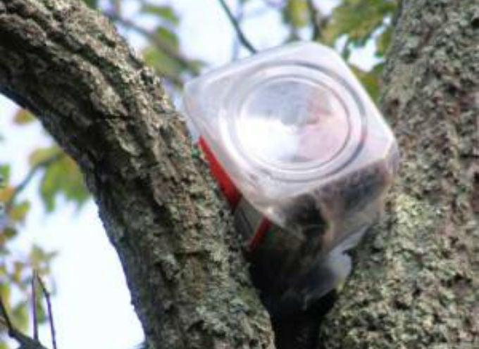 Real-Life Winnie the Pooh Bear Cub Gets Head Stuck in Jar