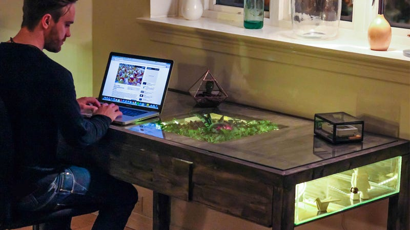 Remind Yourself That Nature Still Exists With a Terrarium Work Desk