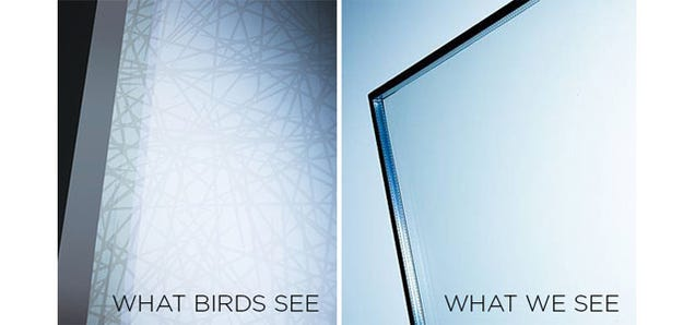 Science Is Finally Making Glass That Birds Won't Fly Into