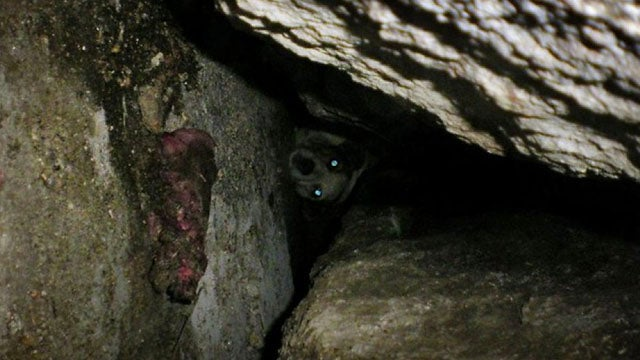 Owner Launches 100-Hour Rescue Mission To Save Dog Trapped Under Boulder