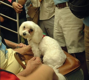 Subways Not a Safe Space for Ladies With Dogs