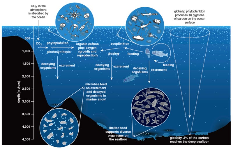 The ocean floor is like a rainforest where feces and dead animals rain from the sky
