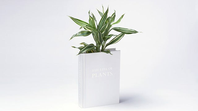 The Book Vase: A Tree Grows in A Tree Grows in Brooklyn