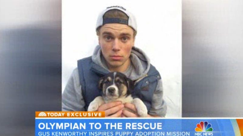 Swoon Alert! Gus Kenworthy Brought His Puppies on the Today Show