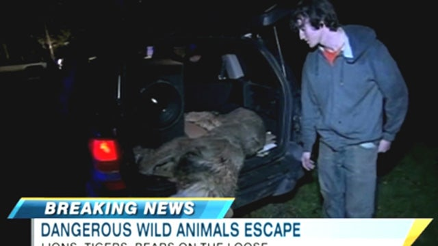 Four Ohio Idiots Stuffed a Lion Carcass in Their Jeep