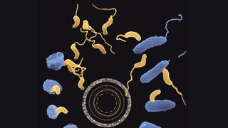 "DARPA Wants Wants to Fund Research into ""Predatory"" Bacteria"