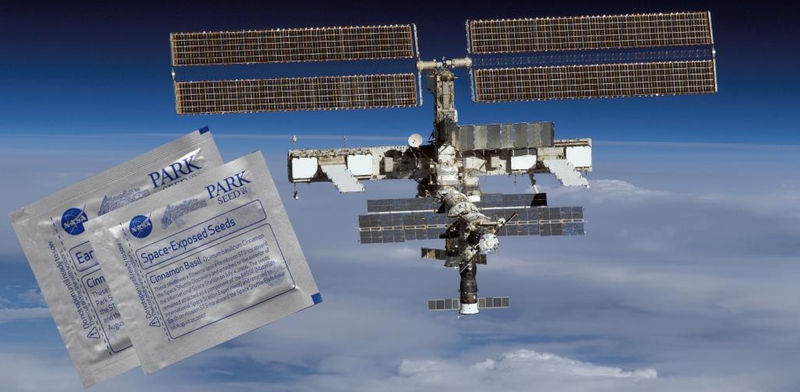 Buy These Seeds From Space and Make Yourself an Intergalactic Salad