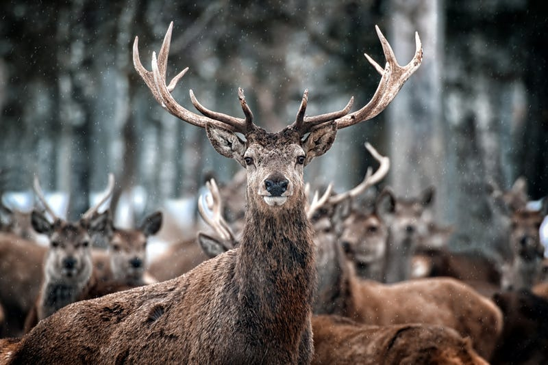 41 People Charged in Scheme To Fake Car Accidents With Dead Deer
