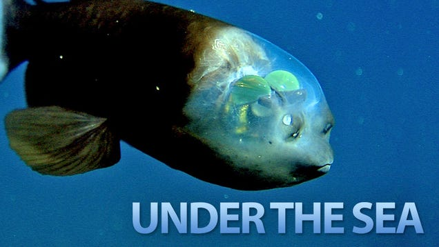 The Seven Weirdest Creatures Under the Sea
