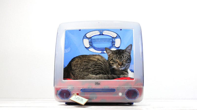 Finally Your Cat Can Live the Dream and Sleep Inside the Computer