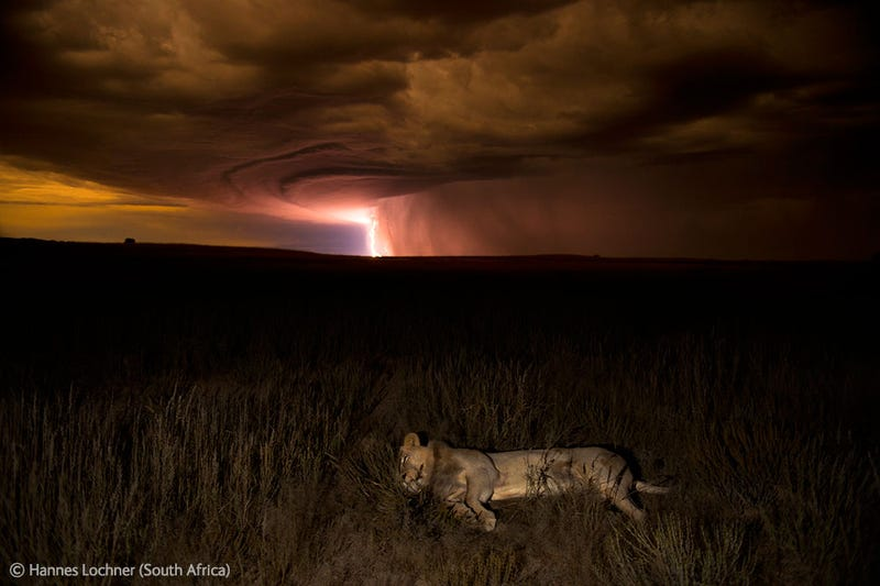 The Year's Most Thrilling (and Heartbreaking) Wildlife Photos