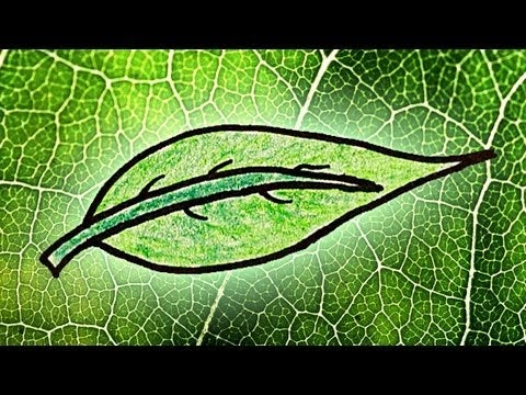 why are plants green Photosynthesis, the process by which green plants and certain other organisms  transform light energy into chemical energy during photosynthesis in green.