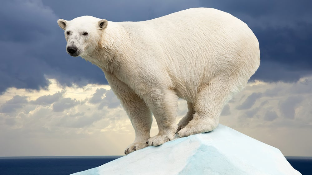 Polar Bears Aren't Descended From Brown Bears After All