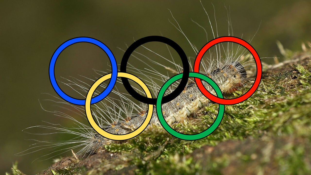 There Is a Poisonous Alien Caterpillar Threatening to Invade the London Olympics. Seriously.