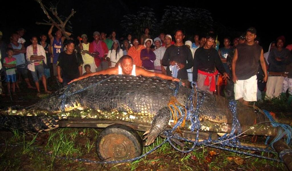 HOLY SHIT GIANT CROCODILE