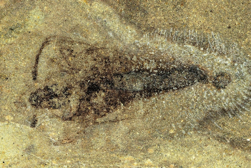 Amazing fossil discovery shows how insects got their wings