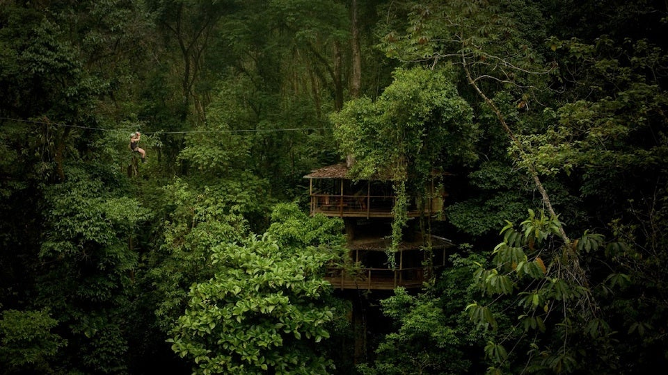 Ask the Mastermind of This Amazing Rain Forest Treehouse Community Anything