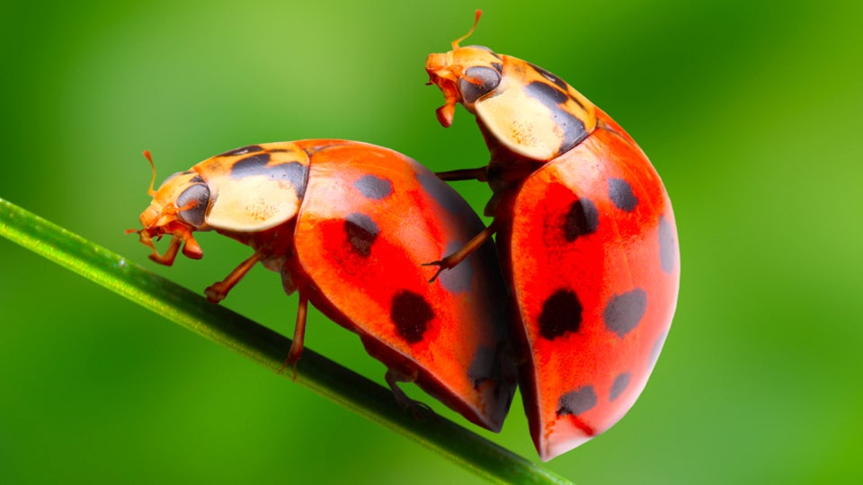 10 Things You Probably Didn't Know About Sex in the Animal Kingdom
