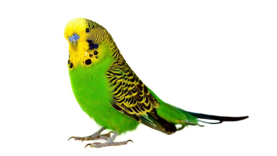 "NYPD Accused of Deliberately Killing a Parakeet: ""F--- the Bird"""