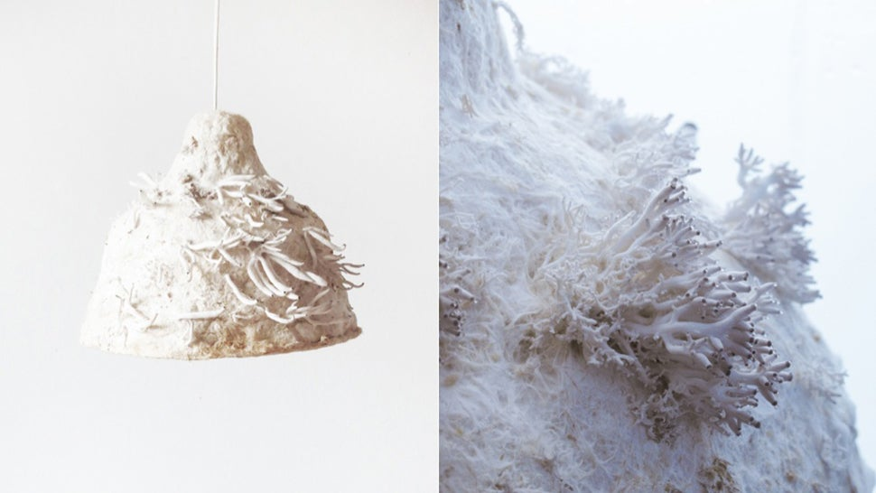 Eat Mushrooms That Grow Off the Top of This Living Lampshade