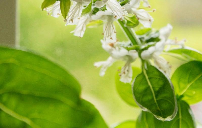 diy garden herbs kitchen
