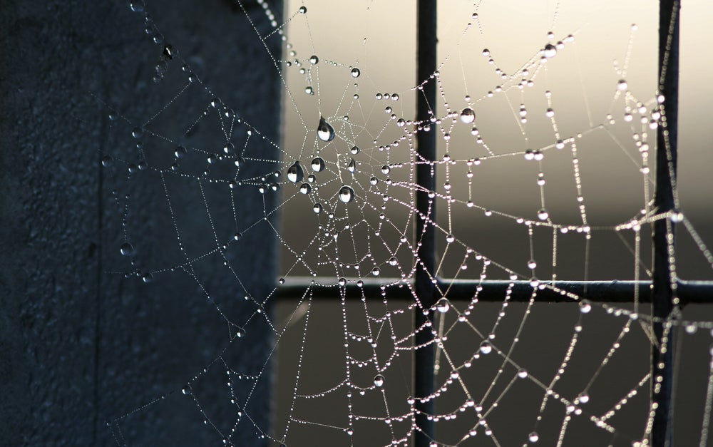 City-Dwelling Spiders Build Webs That Don't Work