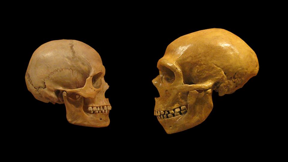 genetics neanderthals