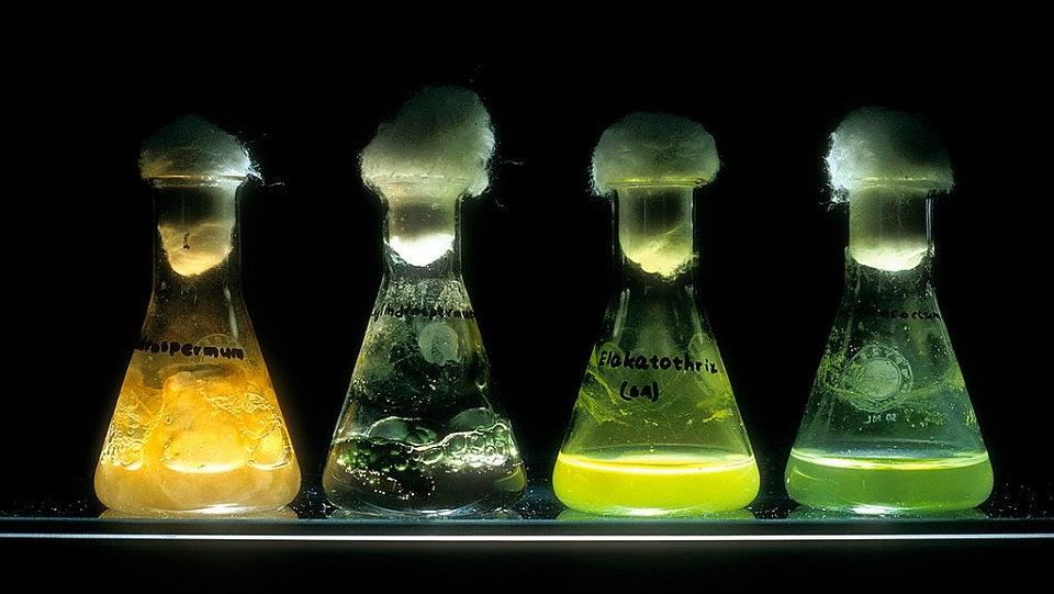 bacteria cyanobacteria